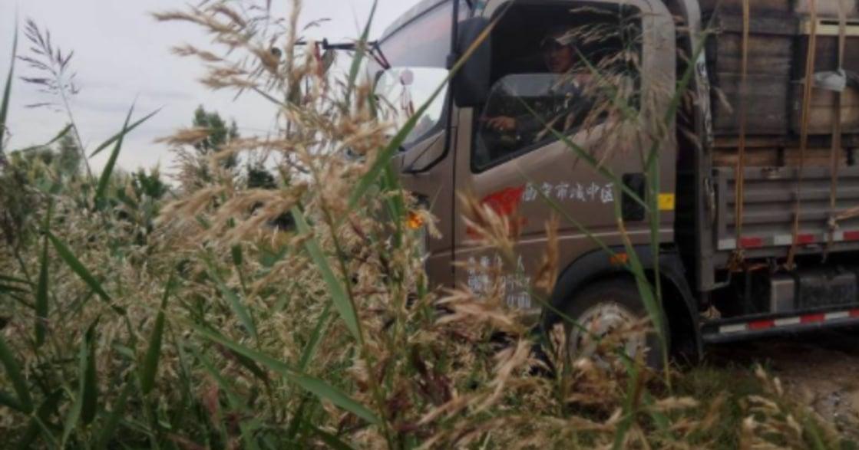 看見藏族風景:養蜂的日子,重新想像生活