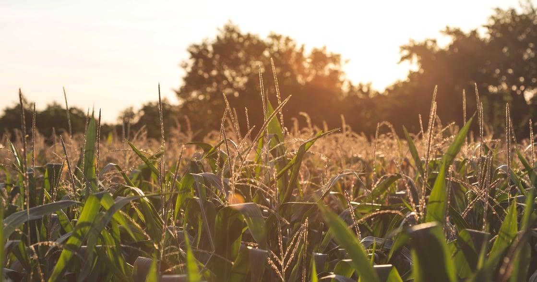 【嗅覺記憶】草地的氣味,想做母親永遠的孩子