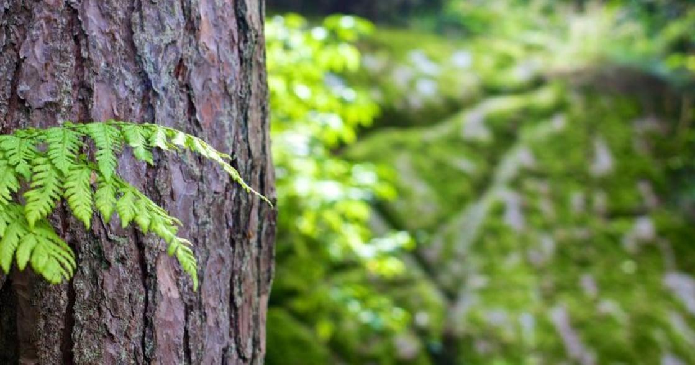 人類平均一年砍掉 150 億棵樹:愛樹人發聲的五十個理由