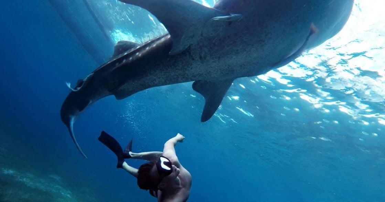 目的地都是自己!流浪女孩的十件 TO DO LIST:公路旅行、高空跳傘、與鯨鯊泳舞