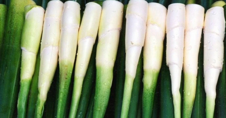 為什麼茭白筍要叫「美人腿」?命名是一種象徵權力的使用