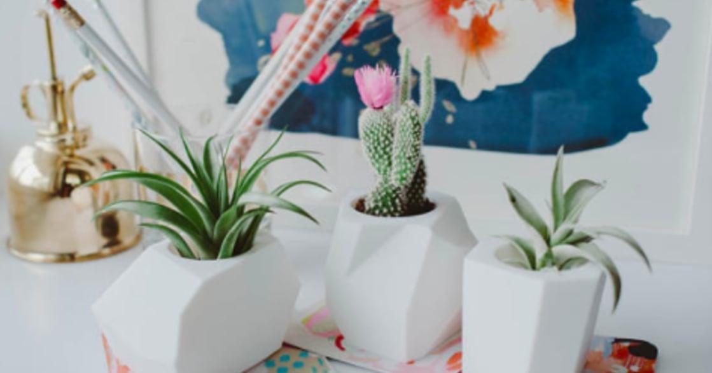 空氣清新又可愛!給辦公環境的療癒植物推薦