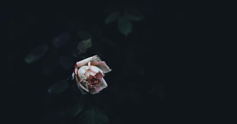 接體員眼中的人生百態:在死亡面前,思考愛是什麼?
