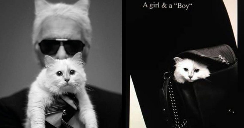 文化、時裝、音樂!獻給貓奴的時尚雜誌《PUSS PUSS》
