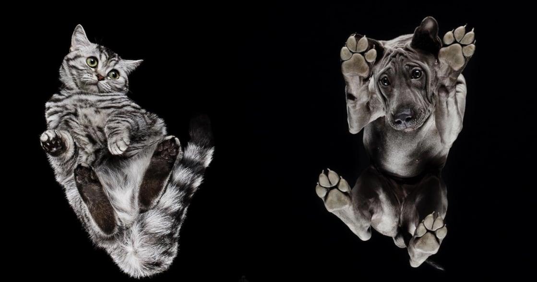 Underlook 攝影集:從動物的角度,來愛護他們
