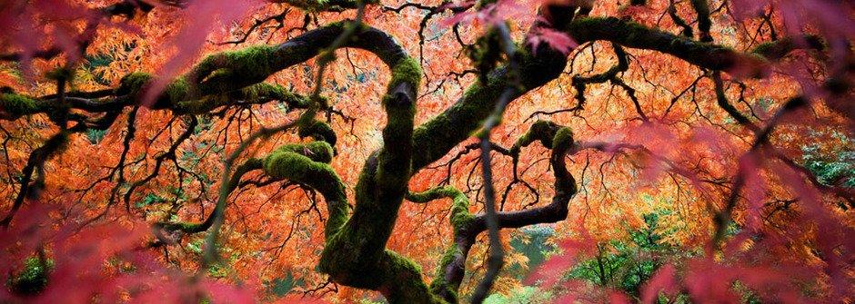 補捉旅途的絢爛時光,2012年國家地理旅行者攝影大賽得獎作品