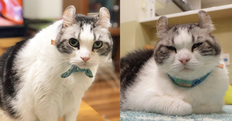 貓奴必追!日本人氣捲耳貓 Ichi 攝影集