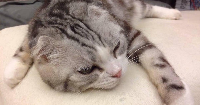 老貓強忍嘔吐不敢弄髒家裡,主人心疼:希望下輩子再當我的孩子