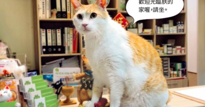 黃阿瑪的後宮生活:當貓咪也邁入高齡生活