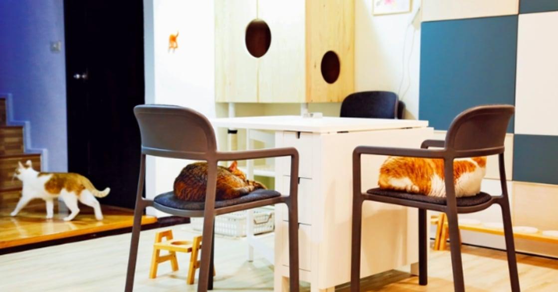 黃阿瑪的後宮生活:最寵貓咪的空間改造術