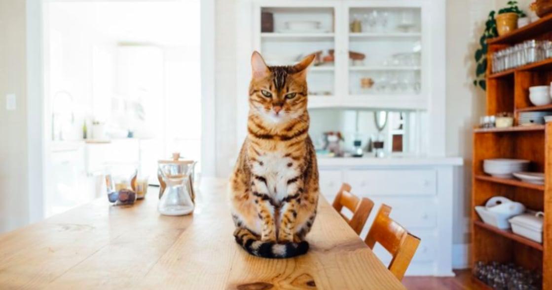 貓咪攻擊、撒嬌該如何應對?貓貓行為大解析
