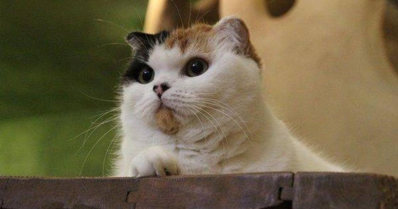與貓咪一起進食!盤點世界五間特色貓咪餐館
