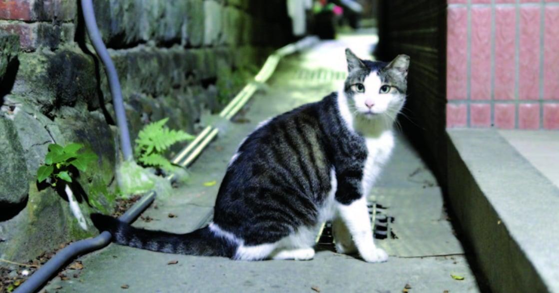 貓咪總是好難懂?只要你愛牠,你會讀懂牠