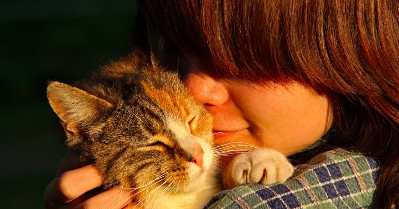 「受傷的日子裡,就大口吸貓吧」寵物心理學:為什麼吸貓這麼療癒人心?