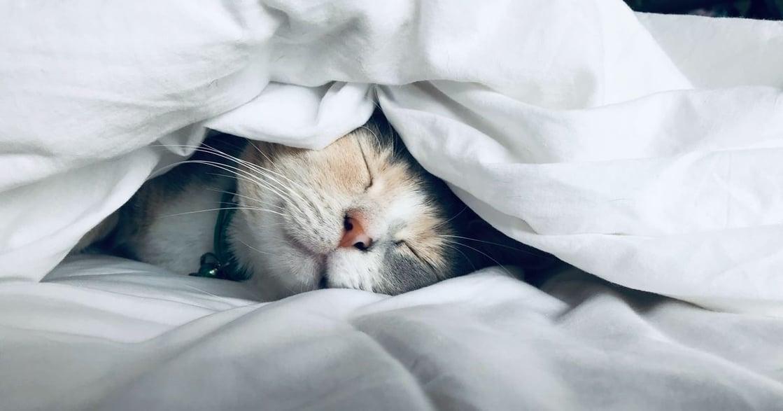 給貓寫情書|我養的貓,是我心中最柔軟的一塊