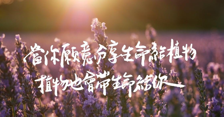 種植物讓人心情愉悅?心理師:花在植物上的時間,最後都會滋養自己