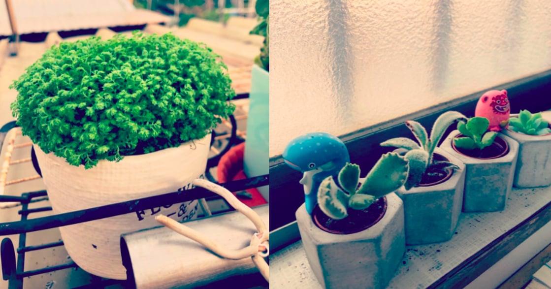 療癒植物學:想獲得平靜的時候,你該去摸一摸盆栽的葉子