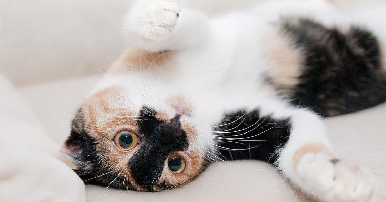 貓的 Pantone 色號?超療癒 11 種貓咪花色圖輯