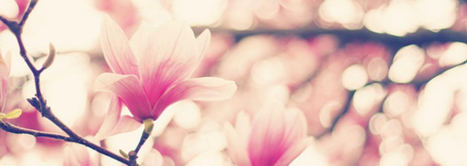 迷人週報:週二限定啪啪購!春光無限好,花開正美好