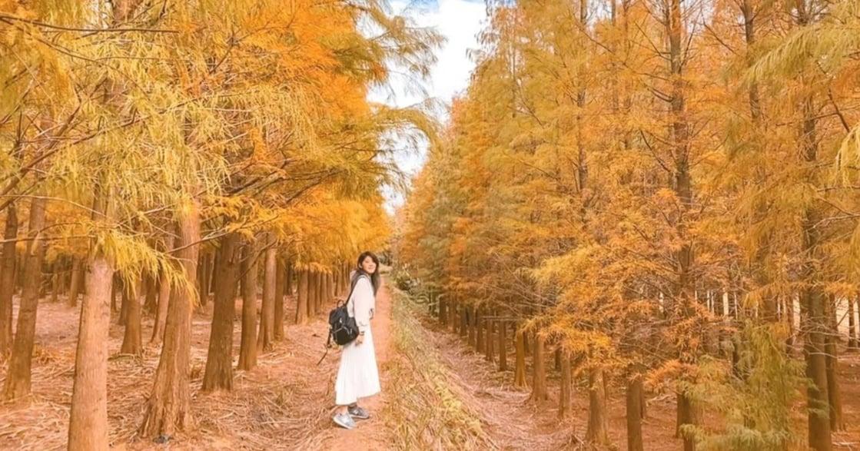 2021 四大落羽松秘境:譜出自己的冬季戀歌!