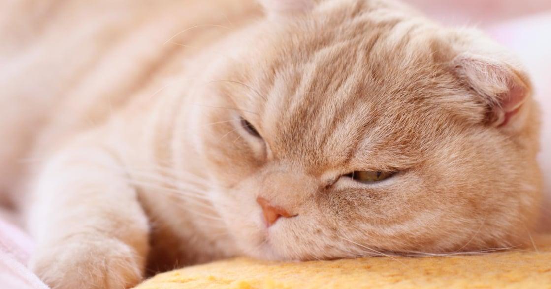 假日總是睡不飽、做事提不起勁?小心,你可能有慢性疲勞症候群!