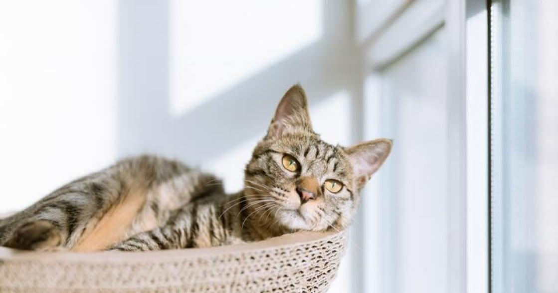 「再忙,也要把時間留給自己」貓咪教會我的 10 件事
