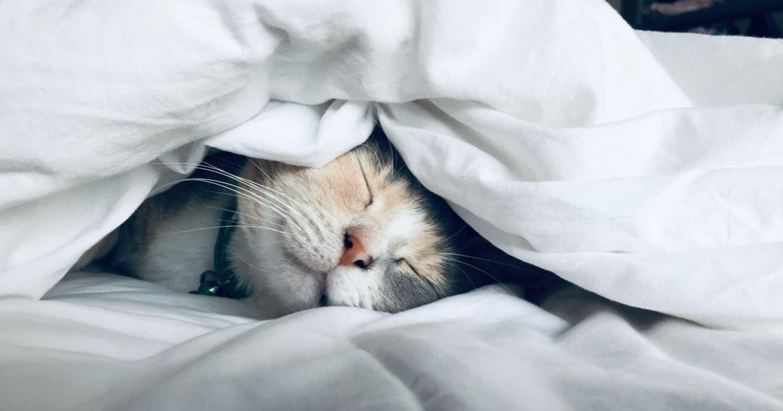 常常在休息後,還是覺得累嗎?給高敏感人的大腦休息法:你可以嘗試「睡前儀式」