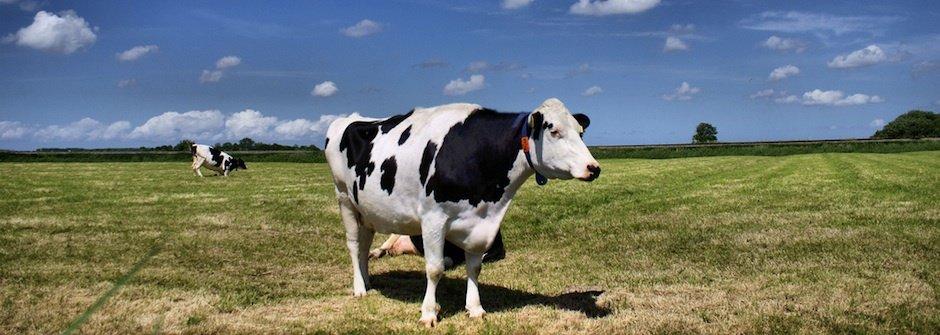 顛覆認知的牛奶知識