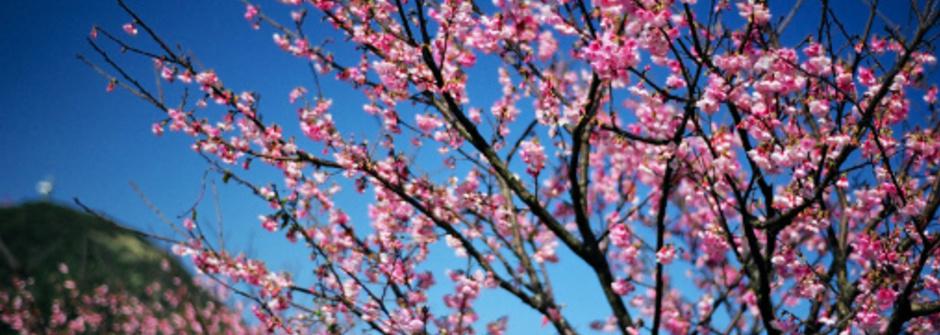塔羅占卜:三月春暖,我的桃花哪裡開?