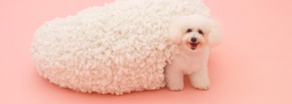 日本建築大師打造前衛狗屋!愛犬住得比主人還舒適