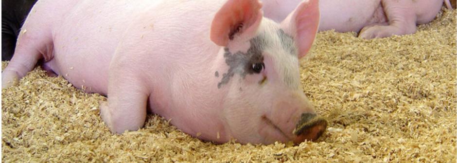當德國人說「你有一隻豬」...十大趣味德文片語蒐集