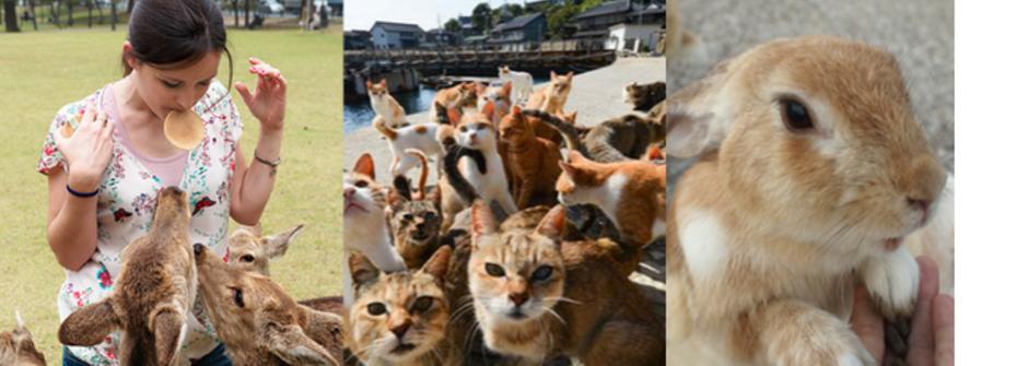 日本自由行新玩法!「兔、貓、鹿」的日本跳島地圖