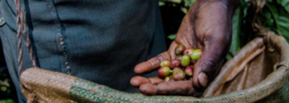 《咖啡癮史》咖啡豆與咖啡樹的偷渡故事