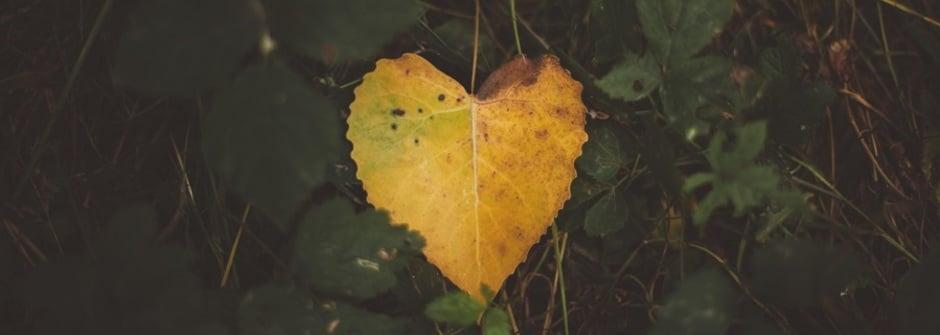 一首歌給未來的他:世界不缺乏愛,缺的是尋找愛的能力