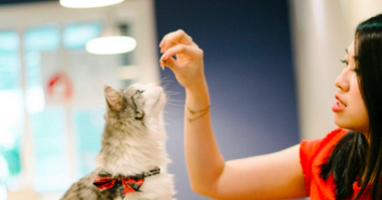 動物溝通師 Leslie:你的貓用驕傲的方式愛著你