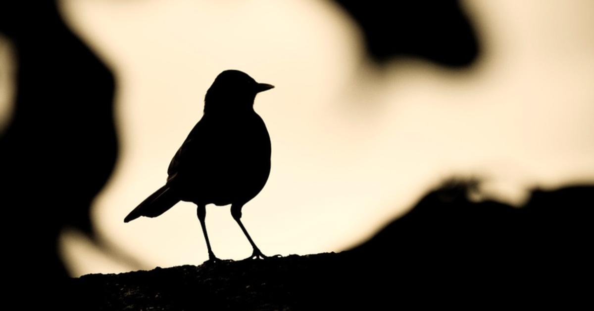 當代寂寞考:你不是怕寂寞,你怕的是不再與人有關