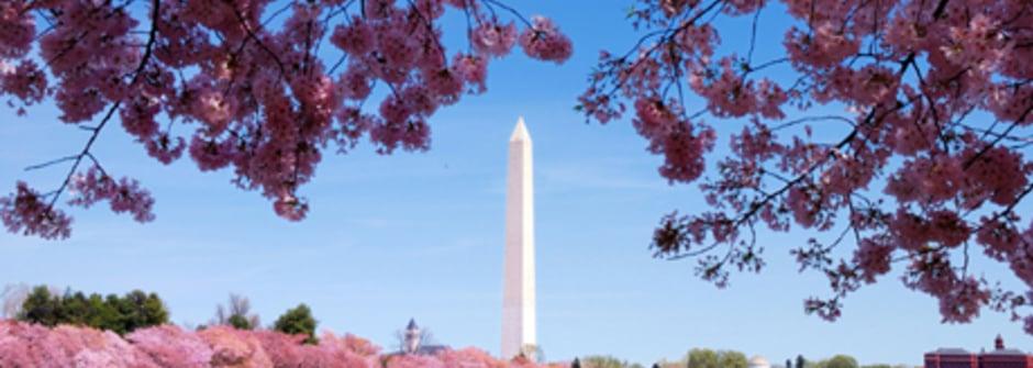 文青遊DC!在地人帶你玩瘋華盛頓