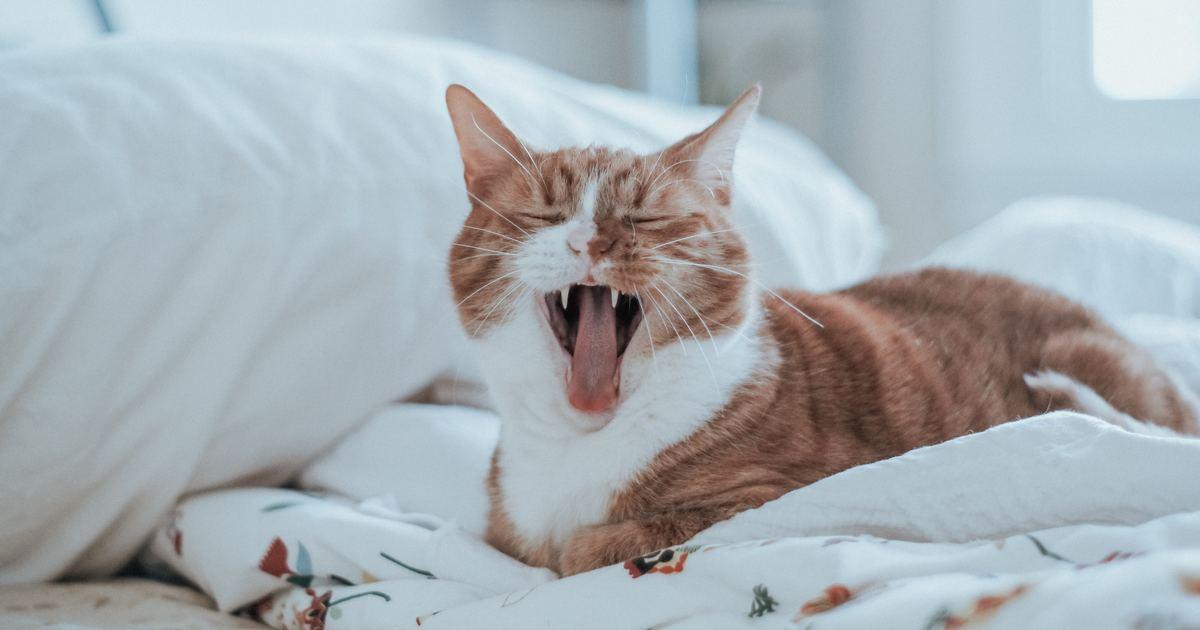 我也想談一場普通的戀愛:你愛我,像愛著一隻貓
