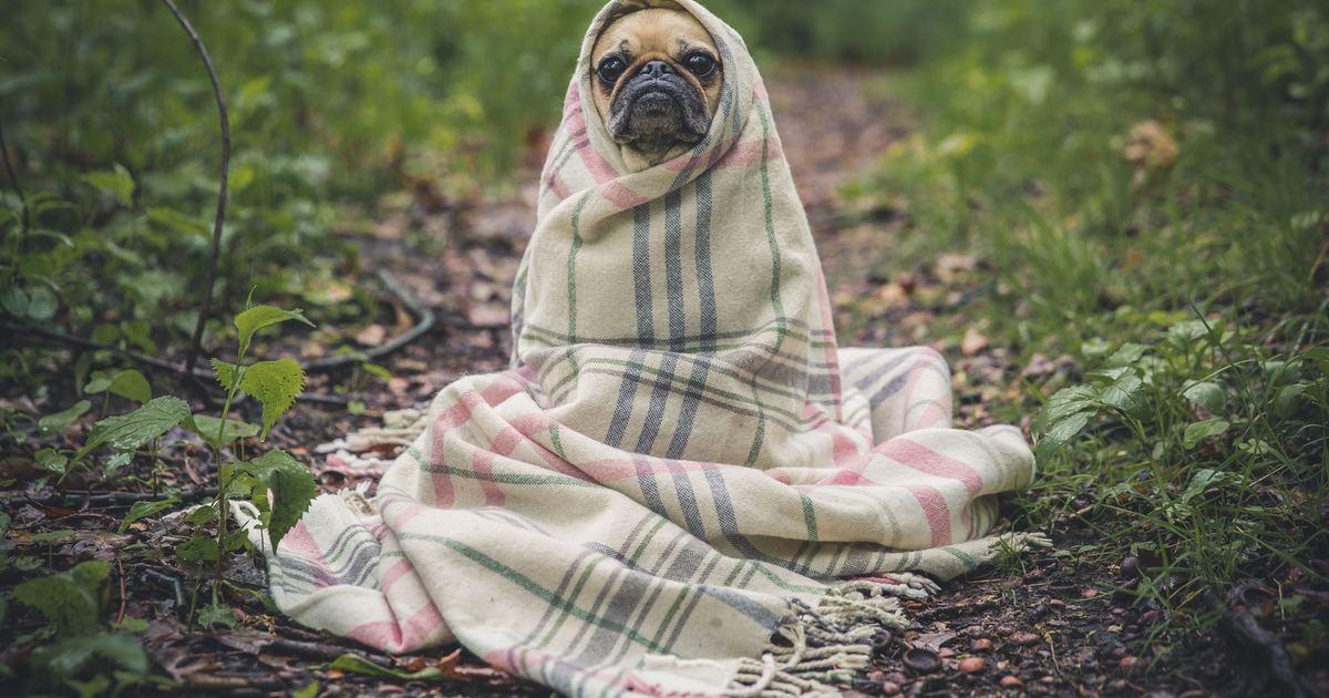 生活英文|afraid of the cold? 我怕冷的英文其實該這樣說