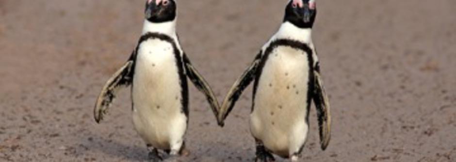 相愛的同志企鵝:相愛是一起走向未來的日子