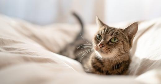 「因為想被陪伴,而養一隻寵物」這樣的想法有什麼問題?