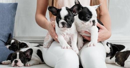 家裡來了一隻新狗狗,起了先來後到的攻擊性行為,飼主該怎麼辦?