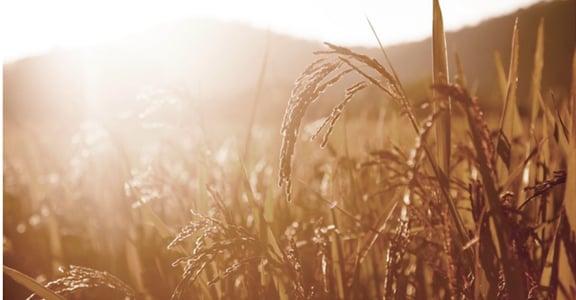 米膚:敏感肌也愛的純天然
