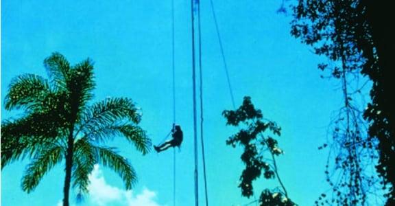 爬樹的女人 羅曼:在高處,我看見科學界的女性多麽孤獨