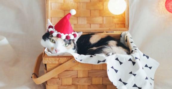 Pinkoi 聖誕市集在華山!200 間獨立設計品牌,5 大逛展重點
