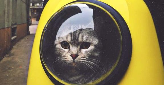 貓奴們請注意!科學教你聽懂貓咪的內心戲