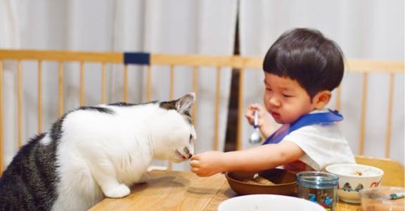 有貓陪伴的日子:我家貓咪,懂得照顧寶寶