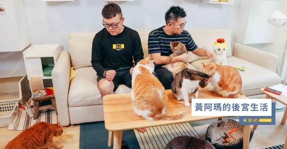兩個男人七隻貓!專訪黃阿瑪的後宮生活:在這個家,一起變老好不好?