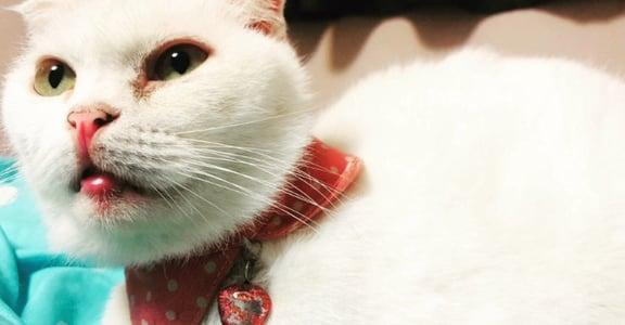 談談寵物溝通:毛孩也會擔心,自己不值得被愛