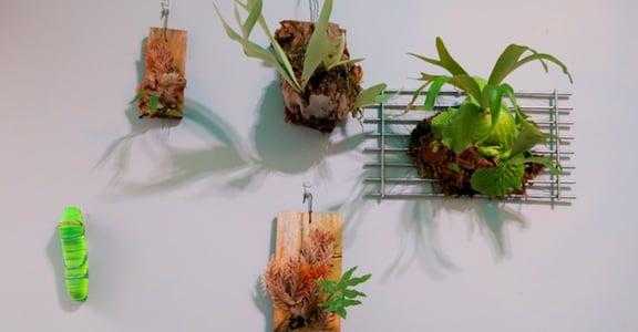 張藝專文|植栽與家:外面找不到的歸屬,讓房間給你
